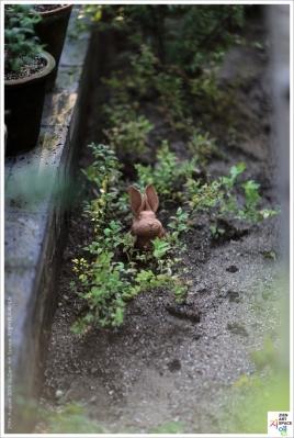 흙빛을 간직하고 있는 토끼의 썸네일 사진