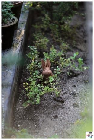 흙빛을 간직하고 있는 토끼 썸네일 사진