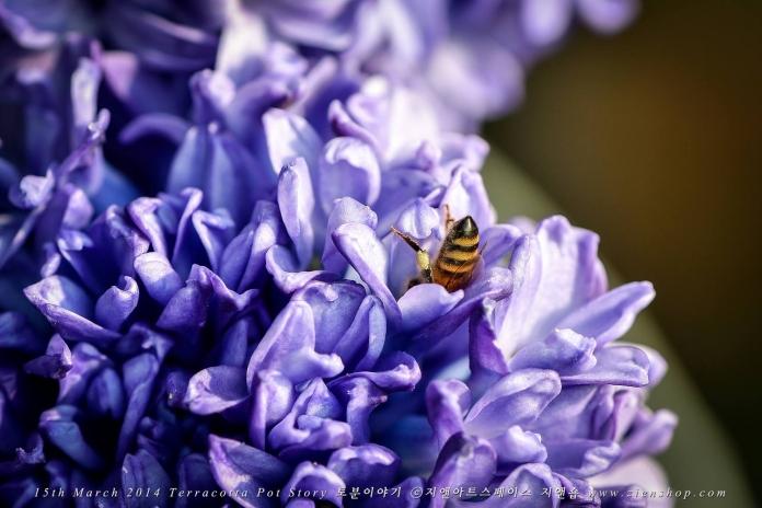 꿀에 취한 벌꿀 썸네일 사진